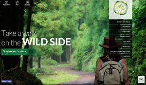 روانشناسی رنگ سبز در طراحی سایت